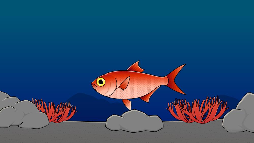 深海で目立つ色したキンメダイ