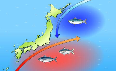 魚の生息図のイラスト