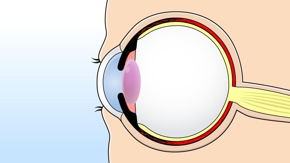 眼球断面のイラスト
