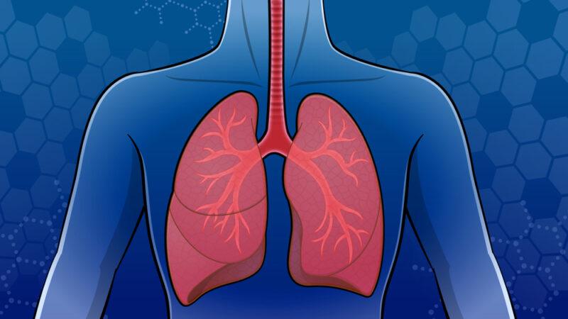 人の肺のイラスト